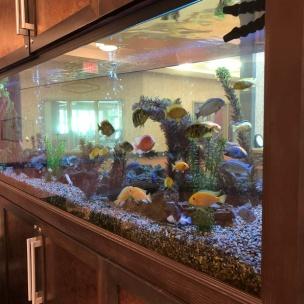 Delhi - Fish Tank 1